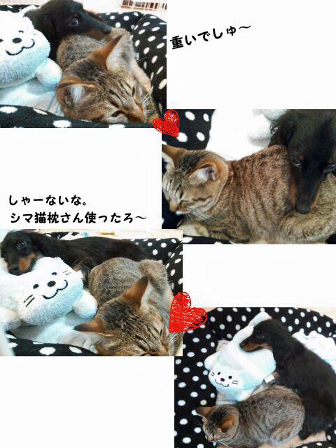 11_marofuku_0123.jpg