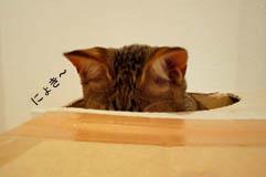 12_blog_fukukakurenbo2_120622.jpg