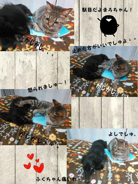 14_marofuku1_0129.jpg