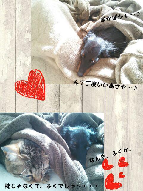 19_marofuku_0209.jpg