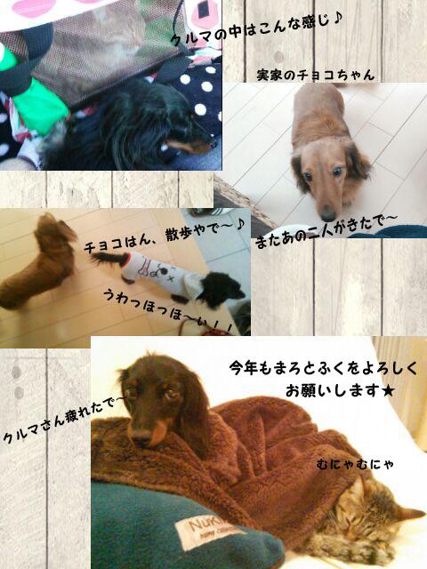 1_marofuku_130104.jpg