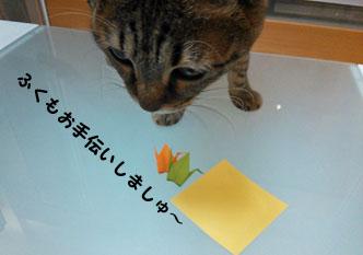 21_marofuku1_0213.jpg