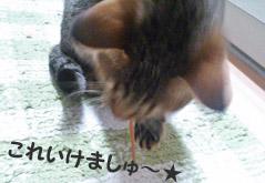 22_marofuku1_0214.jpg