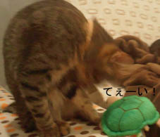24_blog_kamesan2_120714.jpg