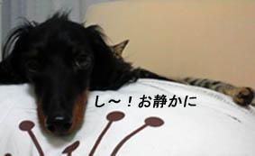 29_blog_dakimaro3_120725.jpg