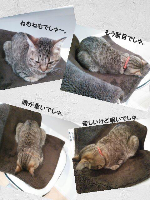 29_marofuku1_0301.jpg