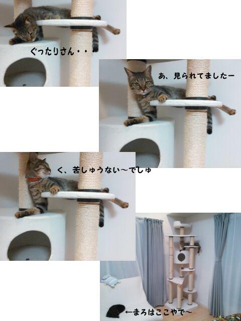 2_marofuku0_0106.jpg