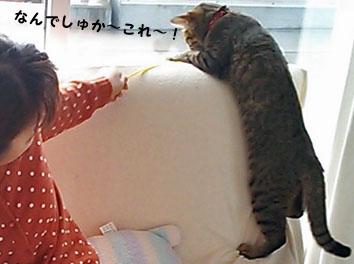 2_marofuku3_0106.jpg