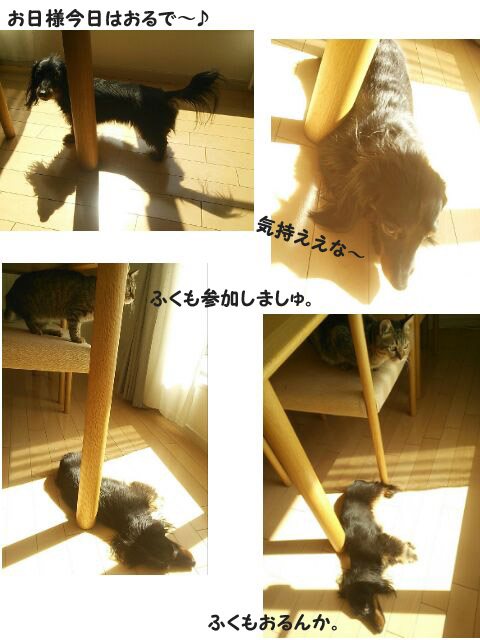 30_marofuku_0303.jpg