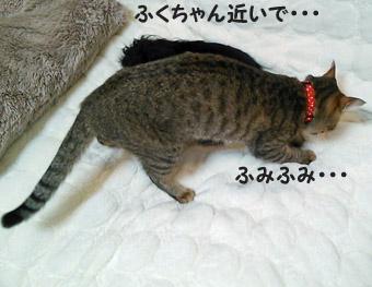 31_marofuku1_0305.jpg
