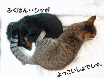 31_marofuku2_0305.jpg