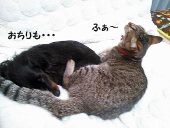 31_marofuku3_0305.jpg