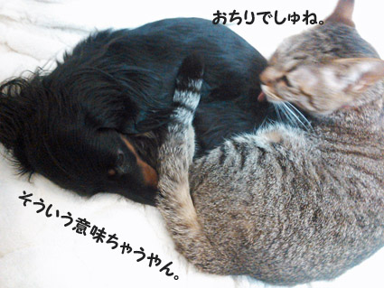 31_marofuku4_0305.jpg