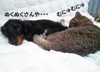 31_marofuku5_0305.jpg