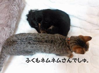31_marofuku_0305.jpg
