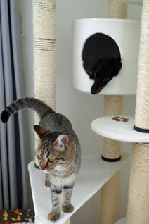 43_blog_cattower3_120822.jpg