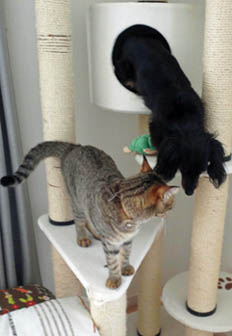 43_blog_cattower4_120822.jpg