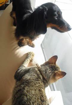 44_blog_sofamarofuku1_120824.jpg