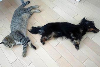 46_blog_fukumarohot1_120828.jpg