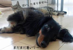 46_blog_fukumarohot2_120828.jpg