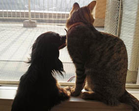 47_blog_fukumarooutside1_120830.jpg