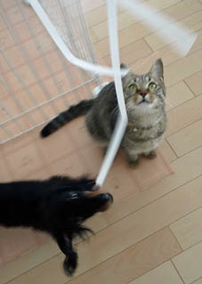 53_fukumaro_string1_120909.jpg