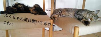 66_chair2_121005.jpg