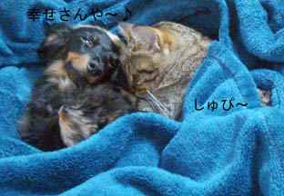 69_blanket2_121013.jpg