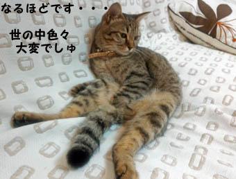 84bendyfuku2_121116.jpg