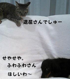 98_marofuku1_1212015.jpg