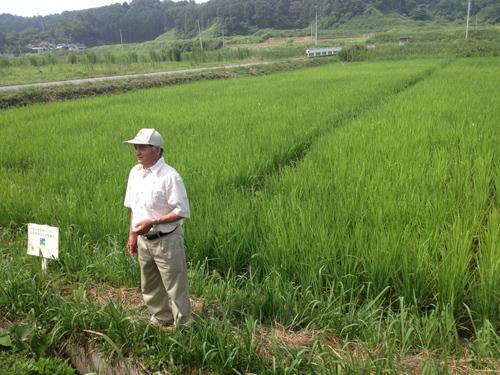 根本顧問水田8.12.2012