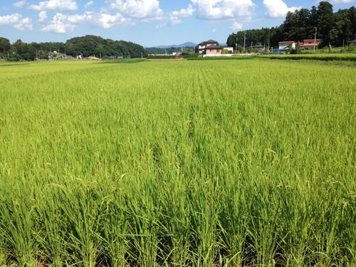 水田8.20.2012