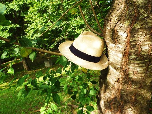 パナマ帽と樹