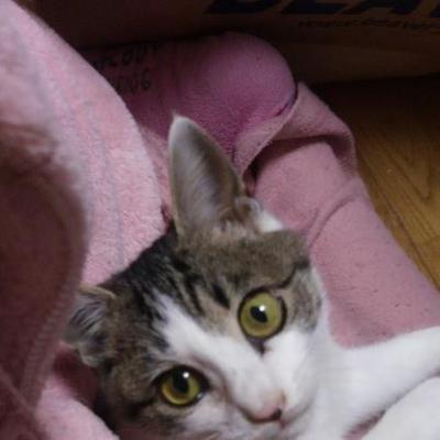 川西募集猫