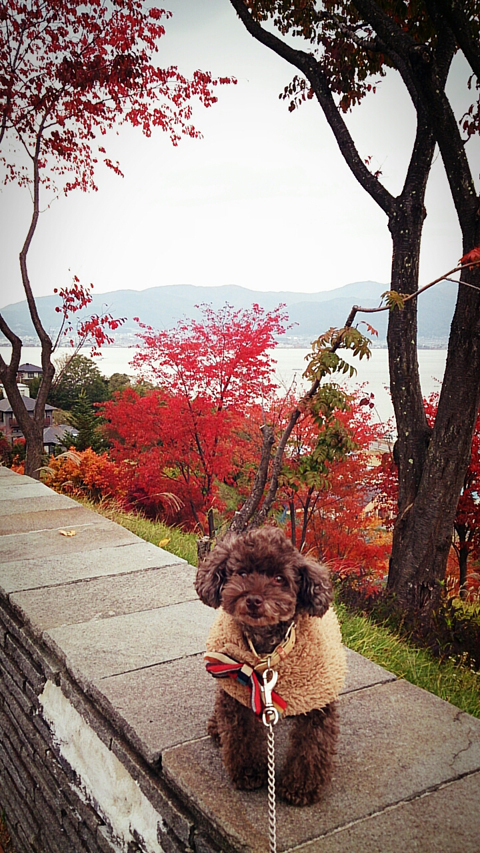 fusuya_131101_02.jpg