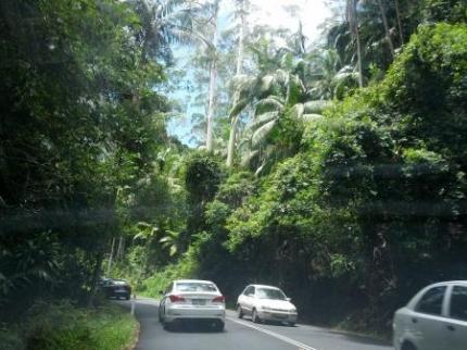 山の中の道1