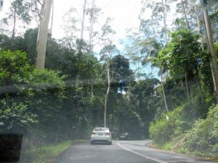 山の中の道2