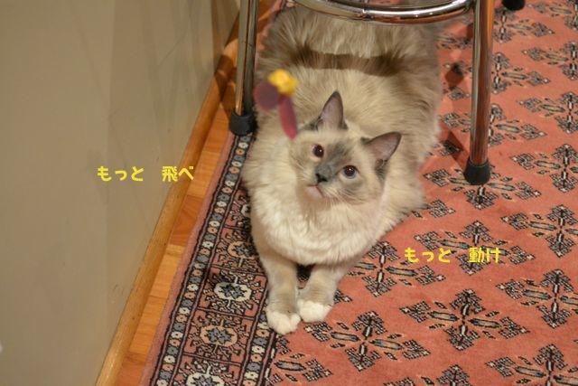 aichan_kasha1.jpg