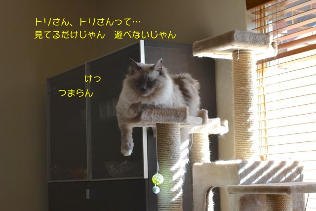 kakakaka3.jpg