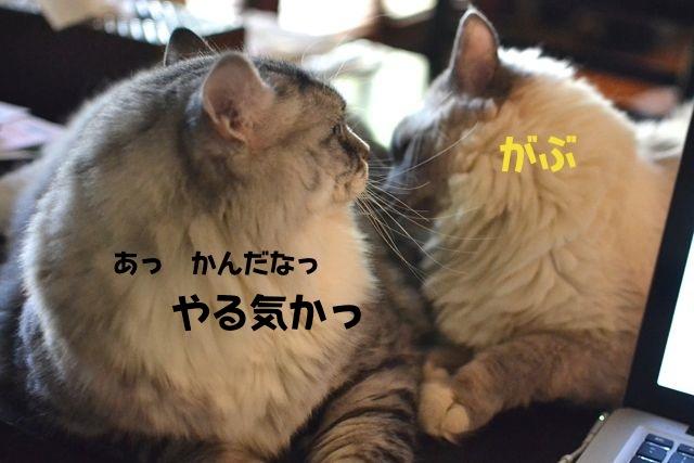 osuna04.jpg