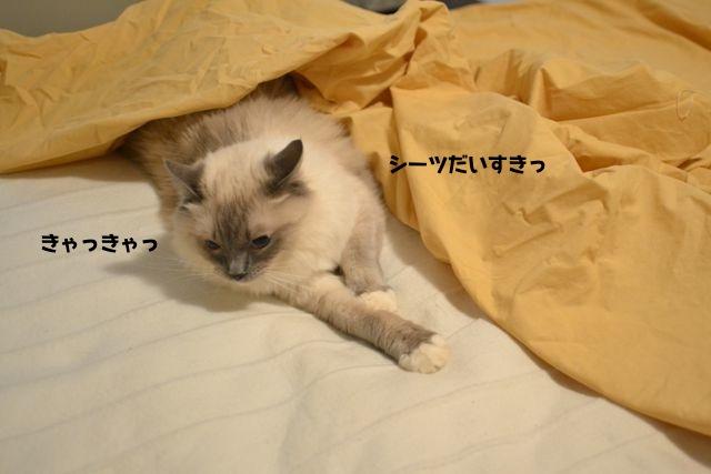 sheets1.jpg