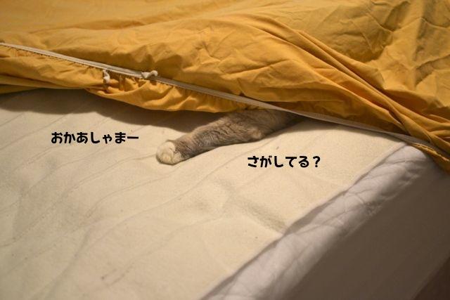sheets3.jpg