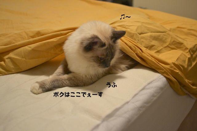 sheets4.jpg