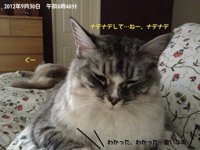 suchan_bed1.jpg