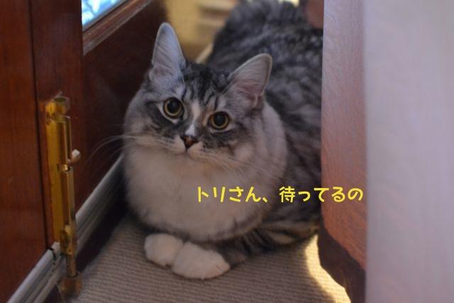 suchan_suitcase.jpg