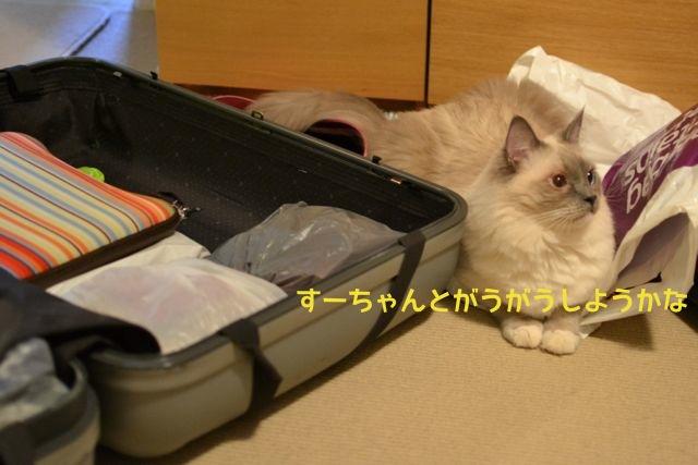 suitcase_aichan.jpg