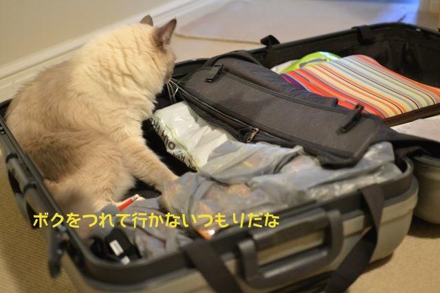 suitcase_aichan2.jpg
