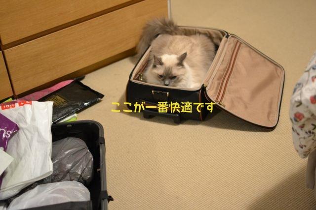 suitcase_aichan3.jpg