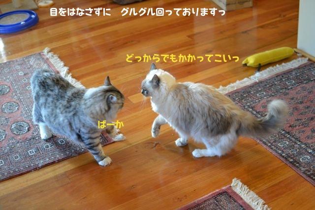 sumou2.jpg