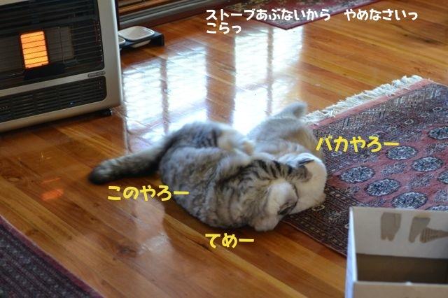 sumou6.jpg